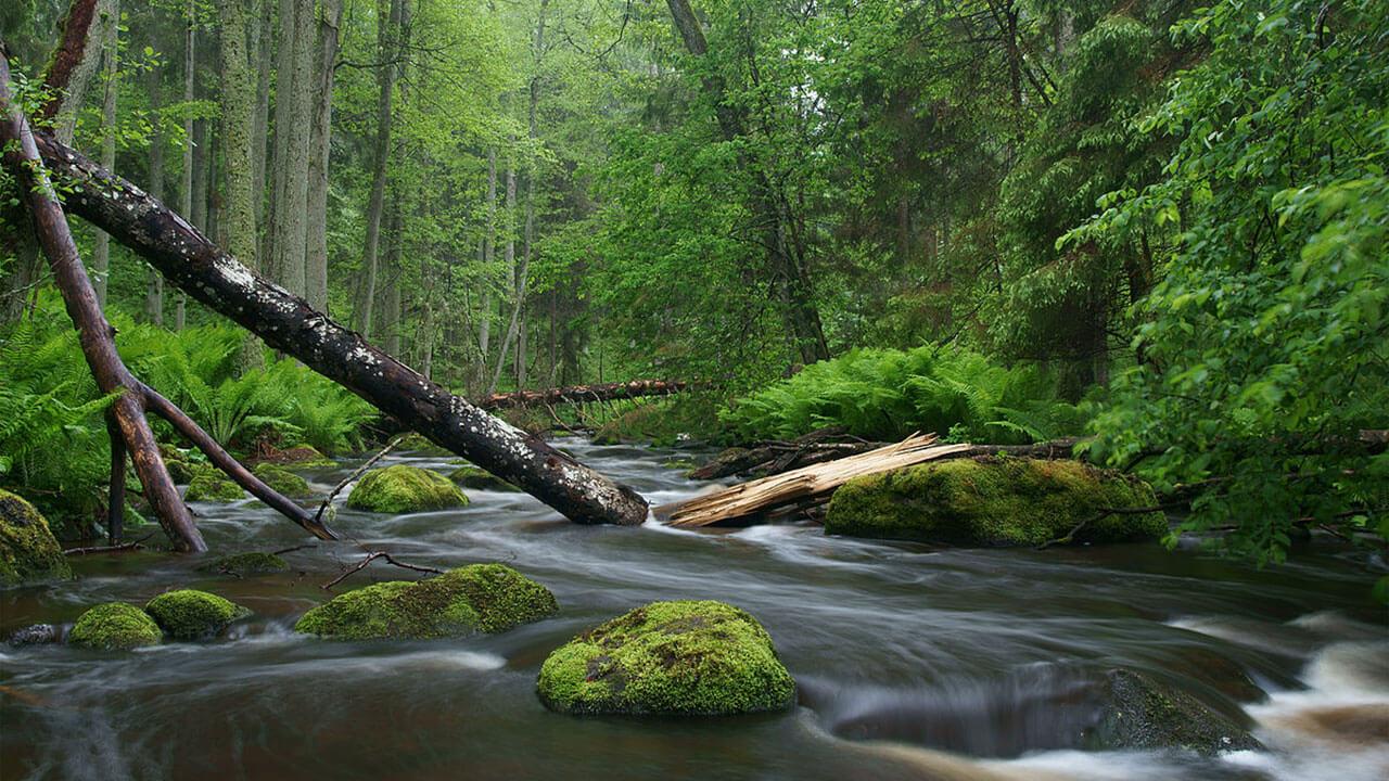 عکس جنگل و رودخانه درباره استفاده از خطوط مورب مربوط