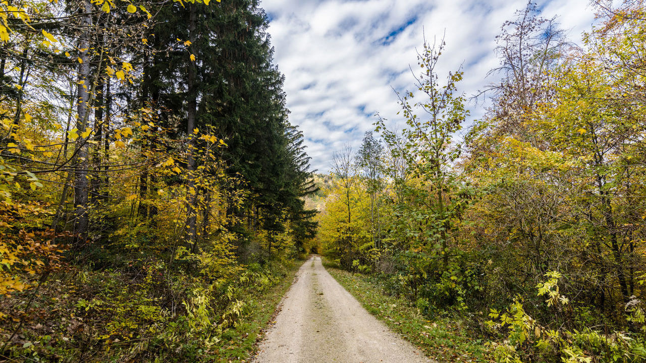 عکس جاده خاکی درباره افزودن به عمق عکس با استفاده از یک نقطه محو مربوط به ۵ اصل کلیدی برای بهبود ترکیب بندی در عکاسی منظره