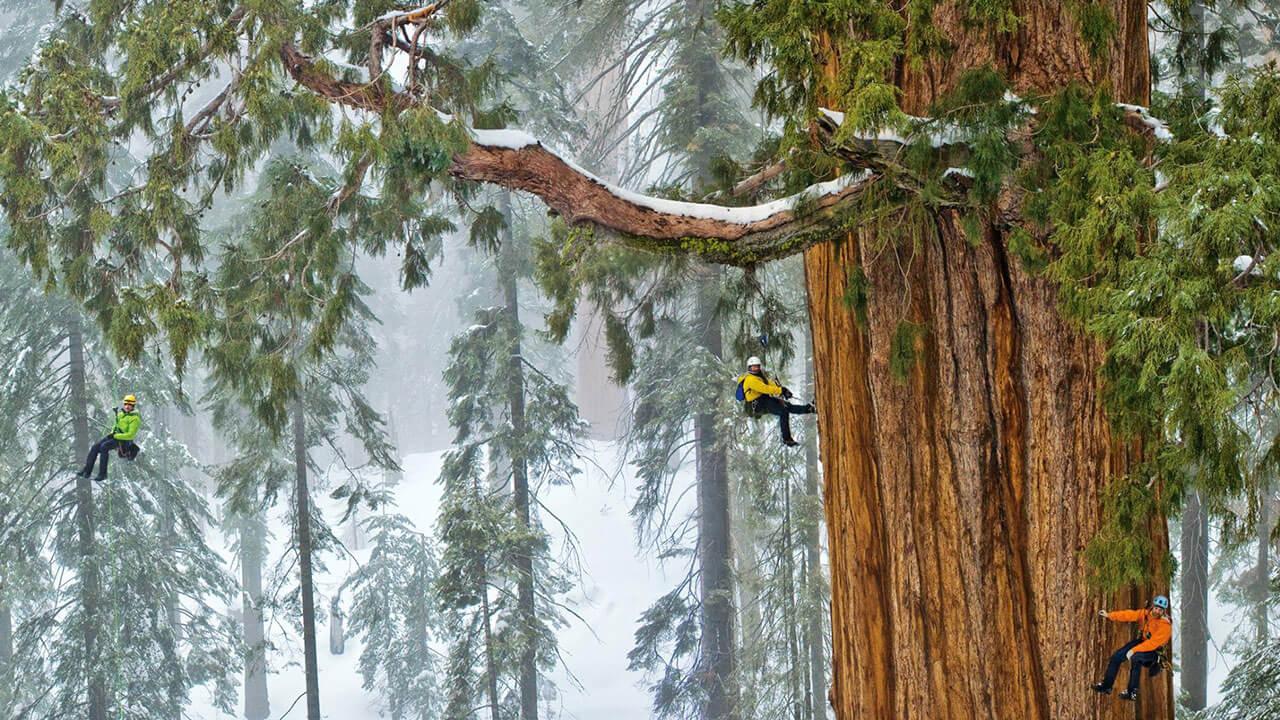 عکس درخت در مورد استفاده از آدمها برای ایجاد مقیاس در عکاسی منظره