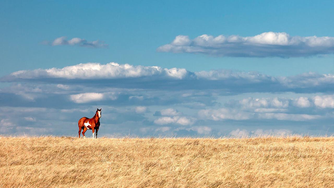 عکس یک اسب در مورد استفاده از حیاتوحش برای ایجاد مقیاس در عکاسی منظره