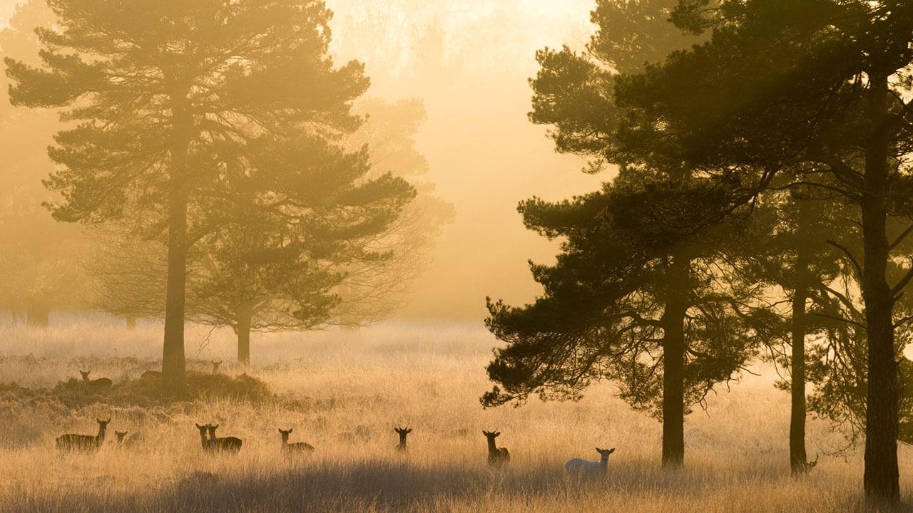 عکس چند آهو و درخت در مورد استفاده از حیاتوحش در عکاسی