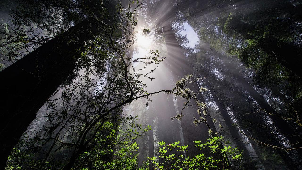 عکس جنگل شلوغ در مورد ترکیببندی