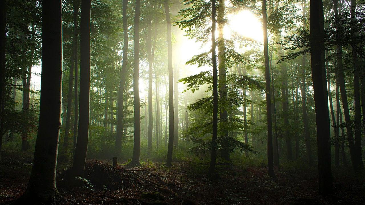 عکس جنگل آشفته مربوط به پست چرا سادگی در عکاسی مهم است