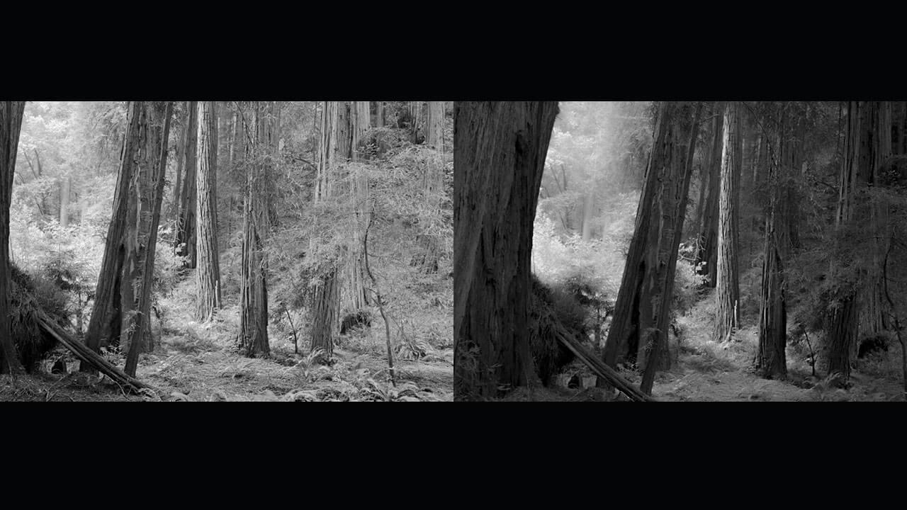 عکس دوم سادگی در ترکیببندی و چیدمان مربوط به پست چرا سادگی در عکاسی مهم است